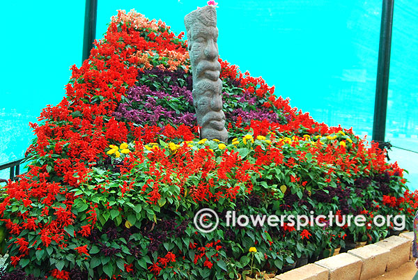 Annual flower mountain lalbagh january 2016