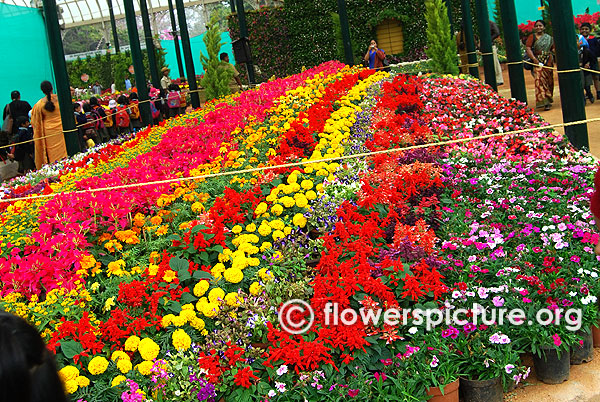 Floral bed lalbagh flower show 2016