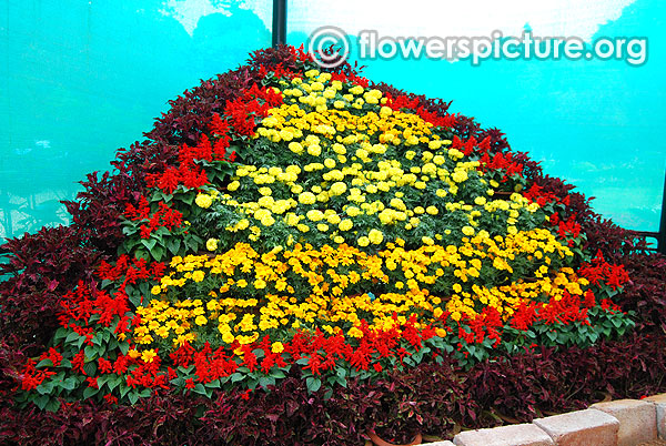 Flower mountain lalbagh bangalore flower show 2016