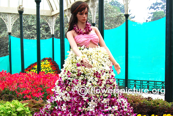 Orchid flower girl lalbagh flower show jan 2016