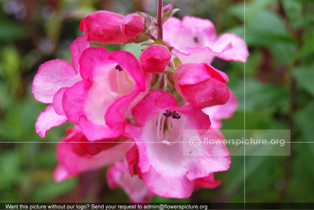 picture of pink - photo #19