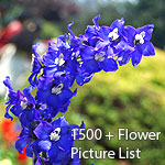 Flower Picture List