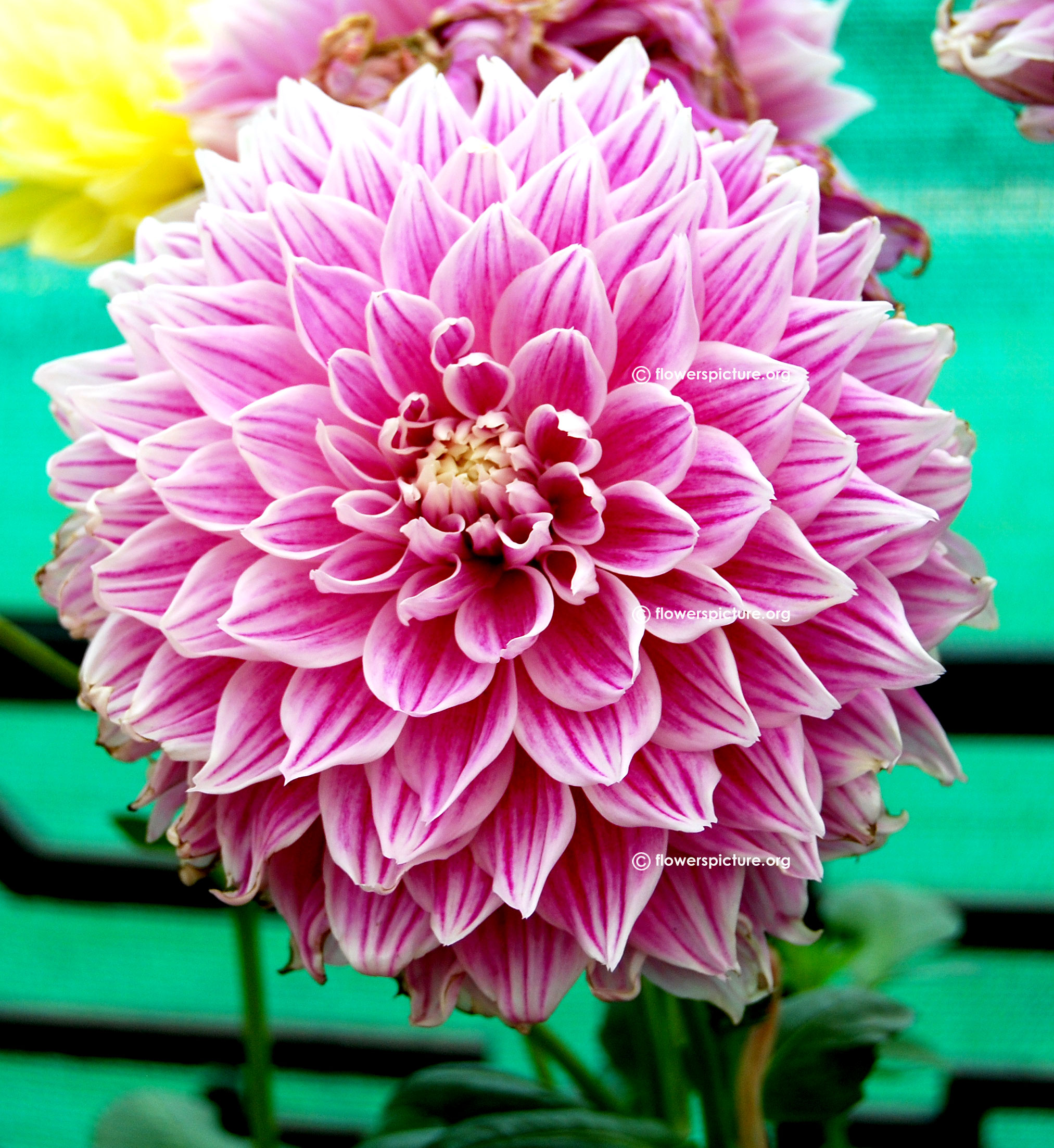 Flower List A to Z Flowers Plants with Names & Details