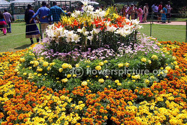 Flower decoration using Liliums, Pink aster & Marigold