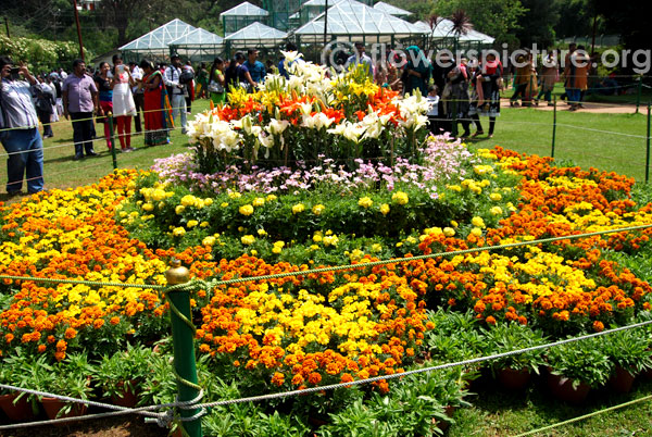 Flower shaped decoration-Ooty flower show 2014