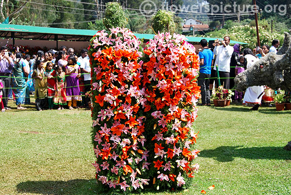 Lilium decoration of ooty tribes