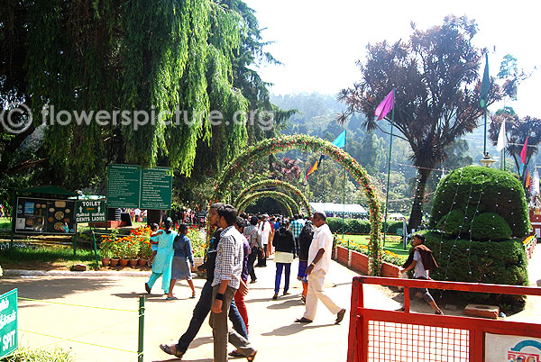 Ooty botanical garden-Front decoration for flower show 2014