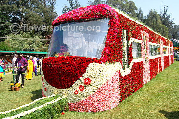 Train decorated with rose dianthus flowers