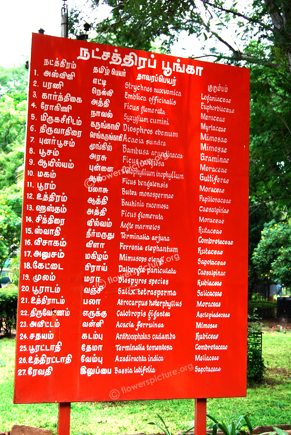 flowers name list in tamil - photo #42